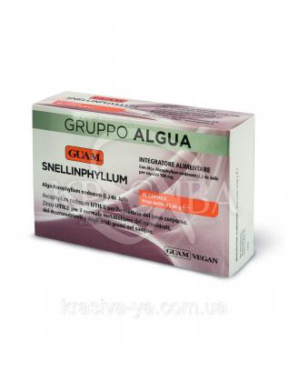 Пищевой продукт Snellinphyllum для специального диетического потребления, 45шт. 33.66 г : Диетические и пищевые добавки