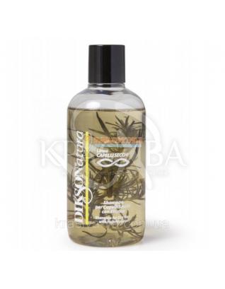 Shampoo Secchi - Шампунь для сухого волосся з екстрактом безсмертника і липи, 250 мл :